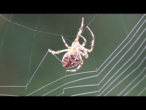 Spider Spinning Its Web - Close-Up