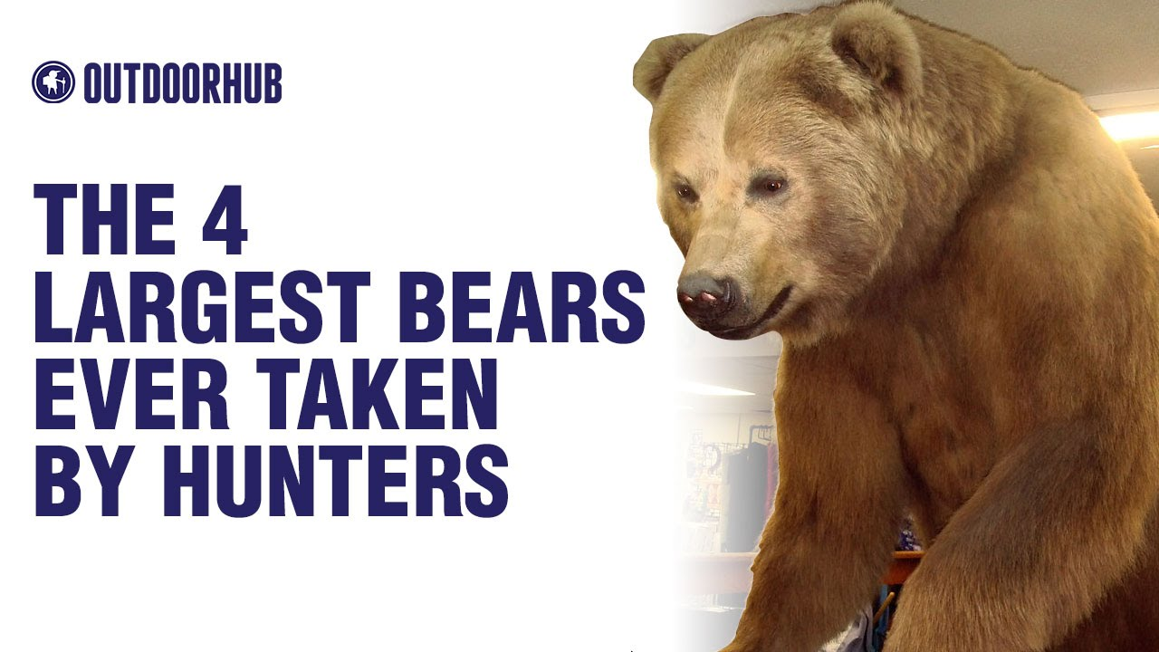 The 4 Largest Bears Ever Taken by Hunters - YouTube