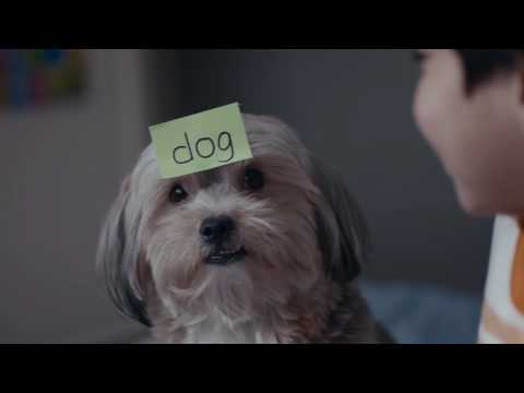 Pedigree® | The Teacher Dog