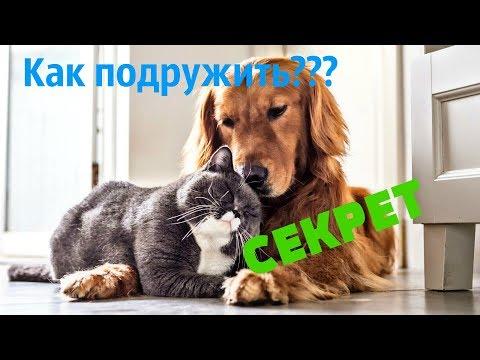 Как подружить кошку с собакой??? Узнай СЕКРЕТ!!!!!!!!!