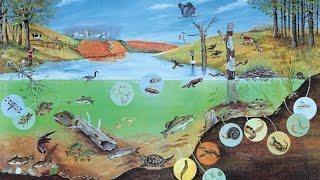 Круговорот веществ в биосфере. Урок биологии.