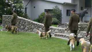 Latest Recruits: Explosive Detecting Dogs