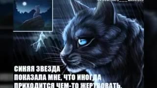 Чему меня научили коты-воители?