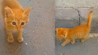 I rescued a cute kitten who was suffer in the street