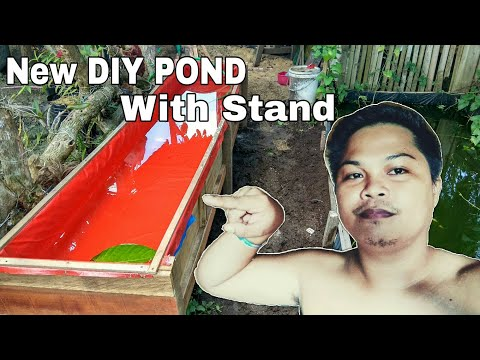 DIY POND FOR MOLLY FISH DIY POND WITH STAND POND FOR GUPPY FISH