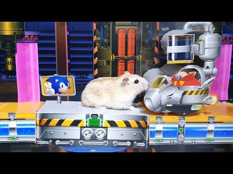 Cute Hamster In Sonic The Hedgehog Maze - Act.2 Chemical Plant Zone
