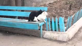 Инь Янь, кошки, секс.