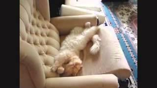 Смешные коты. Подборка приколов #5