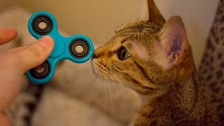 CAT PLAYS WITH FIDGET SPINNER!!