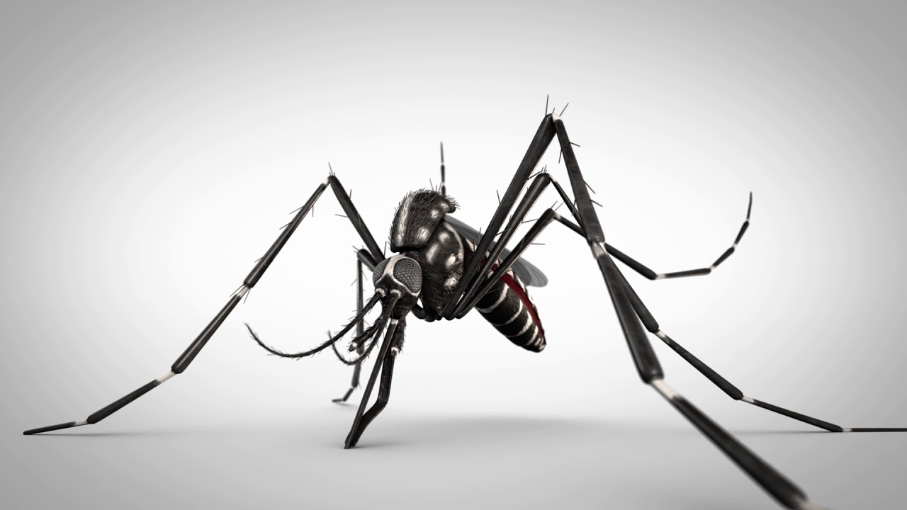 Dengue Fever Infects La Fte De >> Fight The Bite Resource Page Department Of Health State Of Louisiana