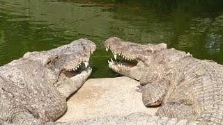 Crocodile Confusion || Lif gameplay w/ Squeak Part 1