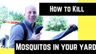 How to kill mosquitoes in your yard (2018)