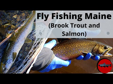 Fly Fishing The First Snow Fall Of The Year (Maine Brook Trout And A PB Landlocked Salmon!)