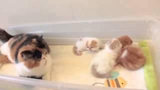 Кошки мамы разговаривают со своими котятами  Видео