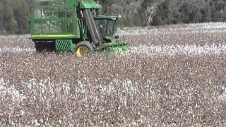 Dryland cotton picking @ Reardon Farms Talwood Qld