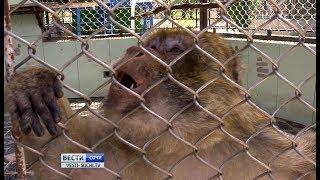 В сочинский обезьяньем питомнике ждут пополнения макаки маготы