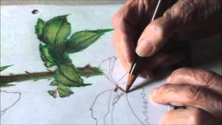 Marie Mandolin ~ Painting A Rose With Colour Pencil  5