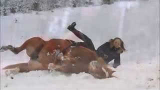 Это не лошадь - это беда...