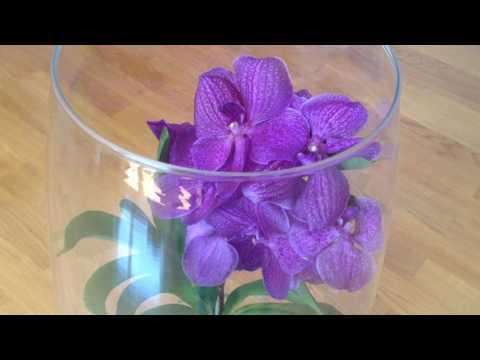 Орхидея Ванда Советы По Уходу