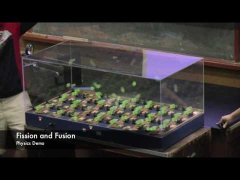 Fission and Fusion: Mousetrap Chain reaction