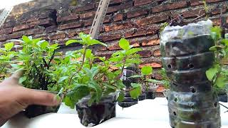 Video 2 tahun belajar Urban Farming Amatiran di atas atap rumah download MP3, 3GP, MP4, WEBM, AVI, FLV Juni 2018