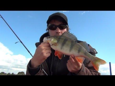 Dropshot Techniken zum Barsch angeln