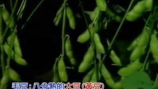 台灣綠金   毛豆