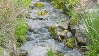 La flor de Bach Agua de Roca - Rock water