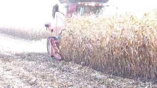 pokazy zip agro w wieszczycach case ih axial flow 8230 w kukurydzy