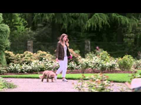Seattle, Washington's Dog Friendly Rose Garden - City Guide