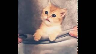 Adorable Baby Kitten | Funny Animals | funny moments | peek a boo
