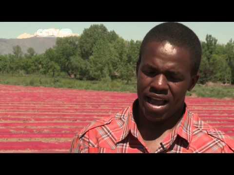 Zambian and Zimbabwean Farmers Training on Organic Methods
