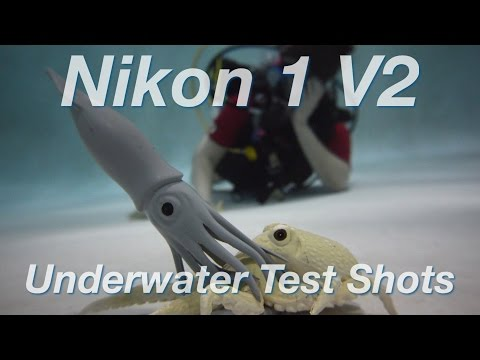 Nikon 1 V2 Test Shots in a NAUTICAM VA-V2 Housing