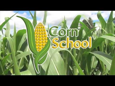 Corn School -  Planting Depth