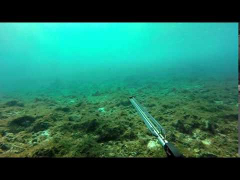 Spearfishing, Majuro Atoll, Marshall Islands, Jan 2015 Berger