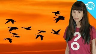 How Do Birds Know Where To Go When They Migrate?