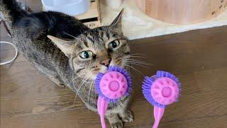 飼い主のマッサージで癒される猫のほっこりほのぼの動画...