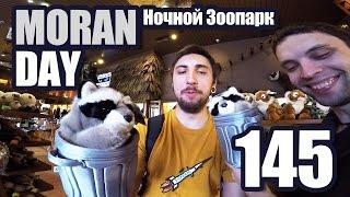 Moran Day 145 - Ночной Зоопарк
