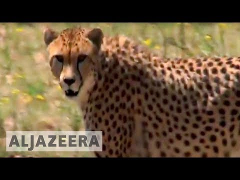Inside Story - Saving endangered species