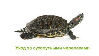 Содержание Сухопутных Черепах & Как Ухаживать За Сухопутными Черепахами. Ветклиника Био-Вет