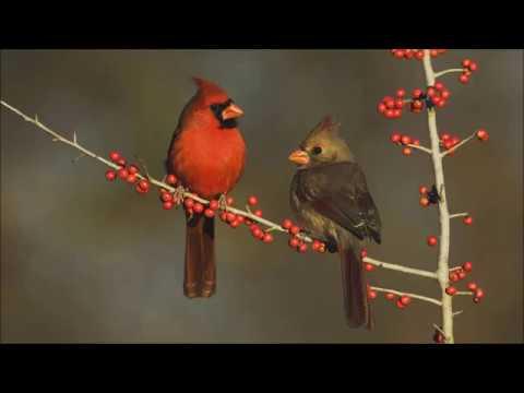 The Cardinal by Robert Penn Warren