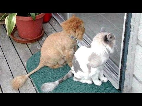Your DAILY DOSE OF LAUGHTER - Super FUNNY ANIMAL compilation