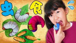 【虫注意】幼虫食べちゃうよ~!!バレンタイン面白チョコ♡虫嫌いのママ絶叫ww himawari-CH