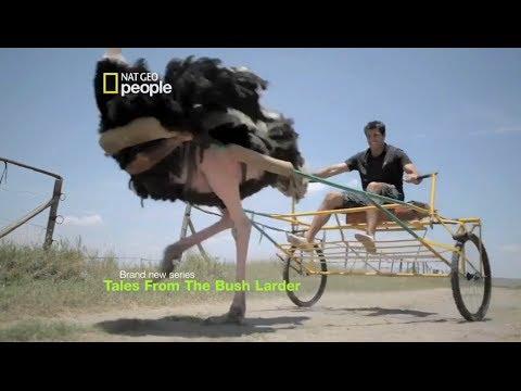 Tales from the Bush Larder Season 3 | Ostrich Riding