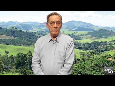 Agro DBO: cafezinho à moda antiga pode revolucionar a cafeicultura brasileira