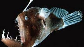 Dünyanın En Tuhaf ve Korkunç Balığı