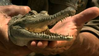 Freshwater Crocodile The Wildlife Man
