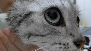 猫のお風呂 ~まさかの裏切りを知り驚愕して腰が抜け…動けない!  -Cat knows the whole truth thumbnail