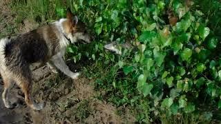 Юта и Дар водяные собаки.22.07.2018.