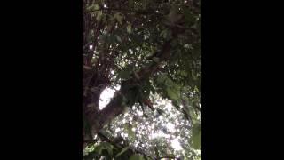 新加坡植物园 黎金波